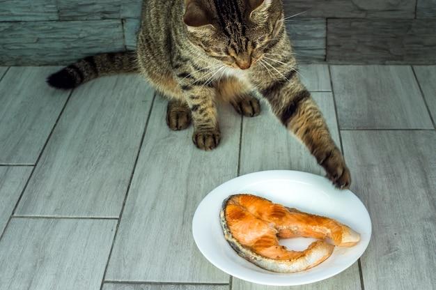 Кот будет есть жареную форель с тарелки