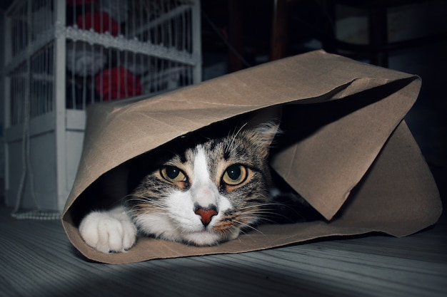 The cat is hiding in a paper bag