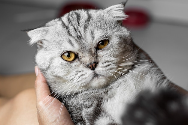 Cat is holding in her arms.