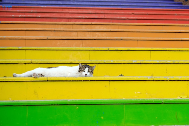 The cat is lying on the famous rainbow staircase in istanbul turkey