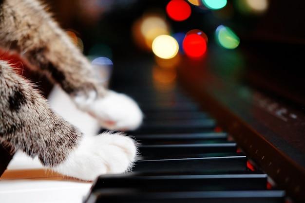 Кошка играет на пианино, крупным планом лапы кошки на фортепиано, мягкие белые лапы кошки