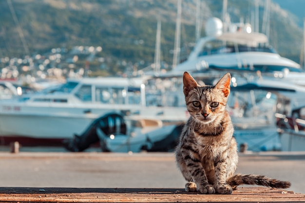The cat is on the quay.