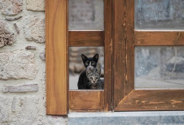 Кот отдыхает в солнечный летний день уличные кошки на природе фото высокого качества