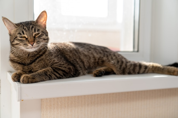 The cat is resting stretched out on the windowsill and squinting her eyes