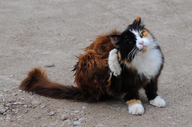 Кошка чешется. открытый кот царапает блох во дворе.
