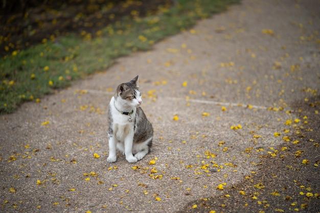 A cat is sitting in the garden. he is so cute. he looks like a little tiger. it is popular pet.