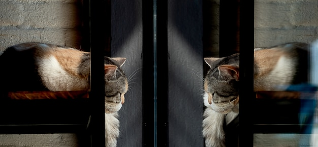 Cat is sleeping in front of a window and see at her reflection in the mirror