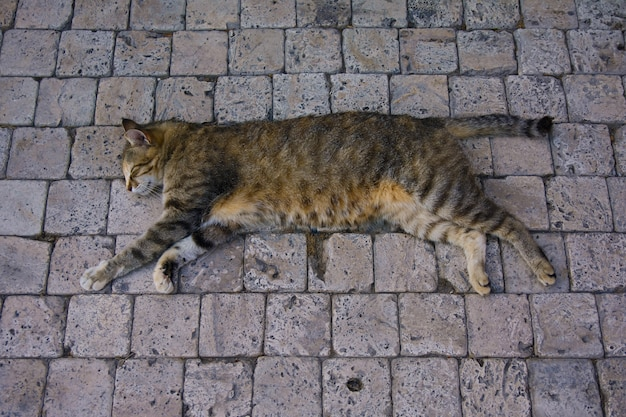 The cat is sleeping in summer on the stone floor