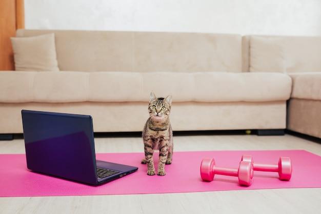 고양이는 바닥에 분홍색 스포츠 아령과 노트북 옆에 서있다