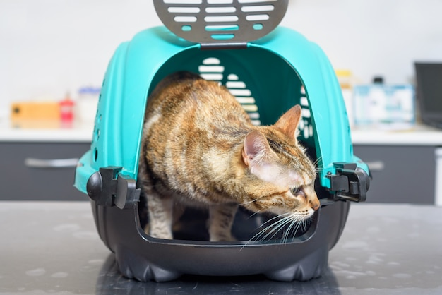 Cat in kennel at veterinary clinic