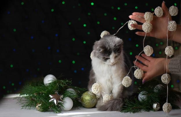 クリスマスの飾りとリボンに横たわる猫。クリスマスかわいい猫。クリスマスツリーの猫。猫がクリスマスを破壊する
