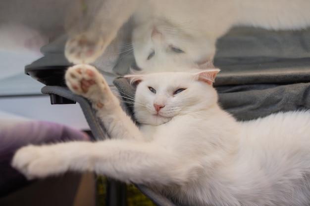 집에서 벽 유리 장착 침대에 누워 고양이