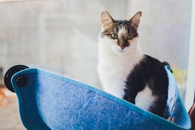 家で壁のガラスに取り付けられたベッドに横たわっている猫。