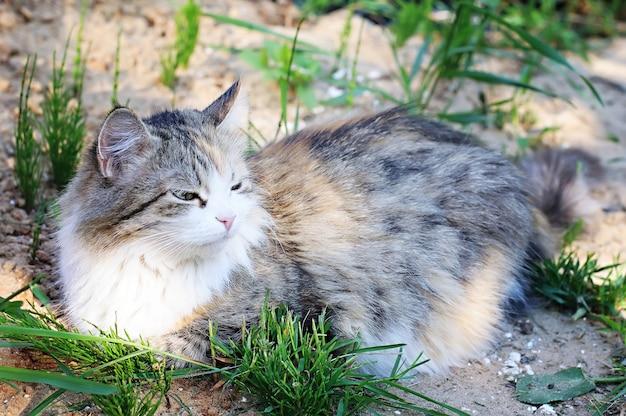 夏の自然に猫の嘘