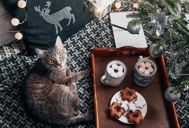 Cat lies by the tray with hot chocolate under the christmas tree