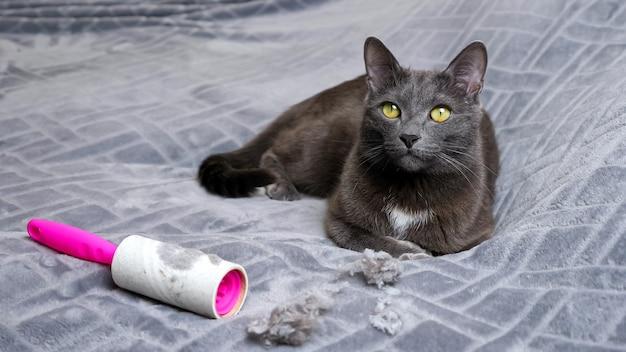고양이는 머리카락 뭉침과 더러운 보푸라기 제거 롤러 근처에 누워 있습니다.