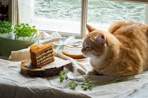 The cat lies next to a piece of honey cake with one burning candle.
