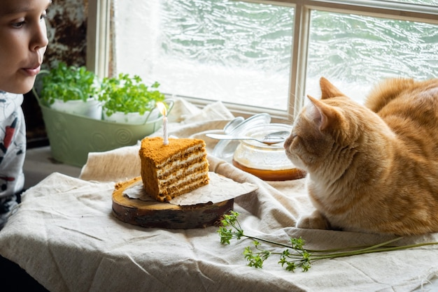 The cat lies next to a piece of honey cake with one burning candle
