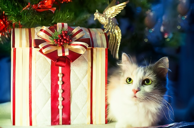 Cat lies with gifts under the christmas tree