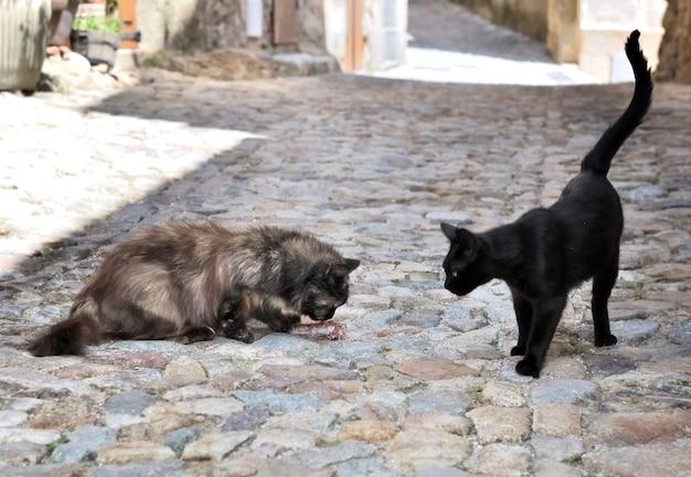 다른 식사를보고 고양이