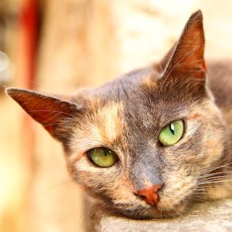 카메라 클로즈업을 보고 있는 고양이