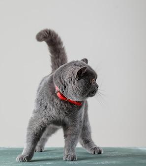 好奇心を持って横を向いた猫