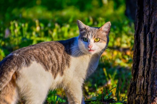 振り返る猫。猫が歩いたり振り返ったりしても気づかれません。