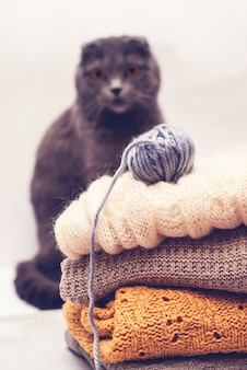 Cat looking at the ball of yarn on knitted clothes