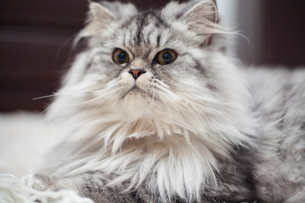 Кошка смотрит вперед