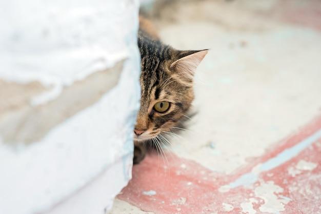 猫が壁の隅から外を見る