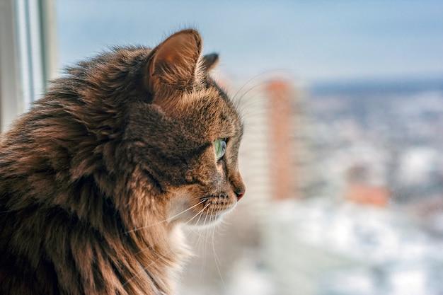 고양이는 겨울에 창 밖을 내다 본다. 창턱에 앉아서 창을 찾고 아름 다운 회색 고양이. 공간을 복사하십시오. 애완 동물 배경. 시티. 신장. 녹색 눈. 솜털 고양이.