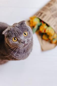 Cat looks upwards sitting on background of flowers