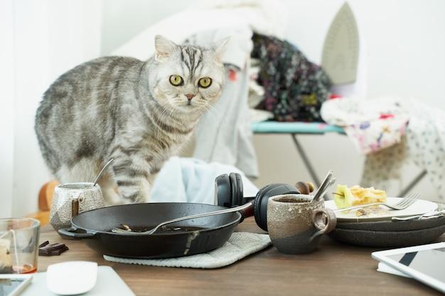 猫はホラーと恐怖で混乱の背景、汚れた皿、山積みの服に見えます