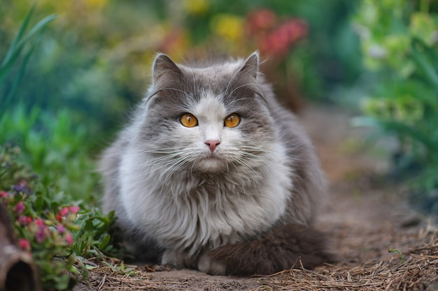 咲く枝の間の庭で横になって夢を見ている猫