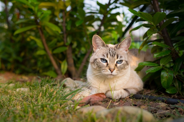 Cat lying down on the grass looking at camera