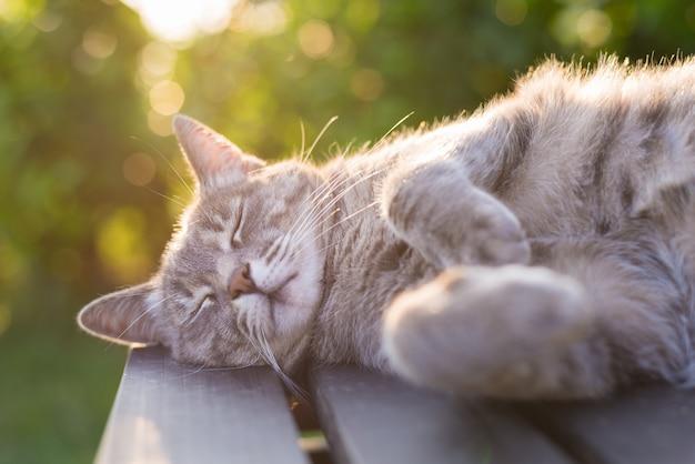 ベンチに横たわっている猫