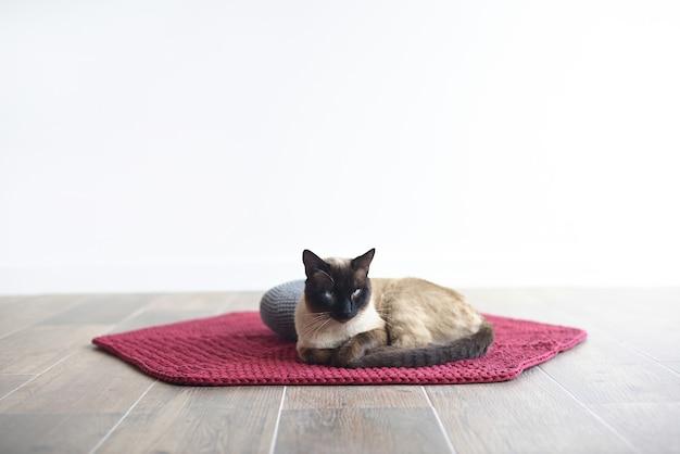 Кошка лежит на ковре и подушке для медитации на белом фоне с копией пространства