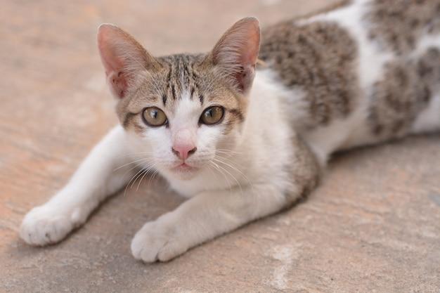 Кот лежит на полу для фона