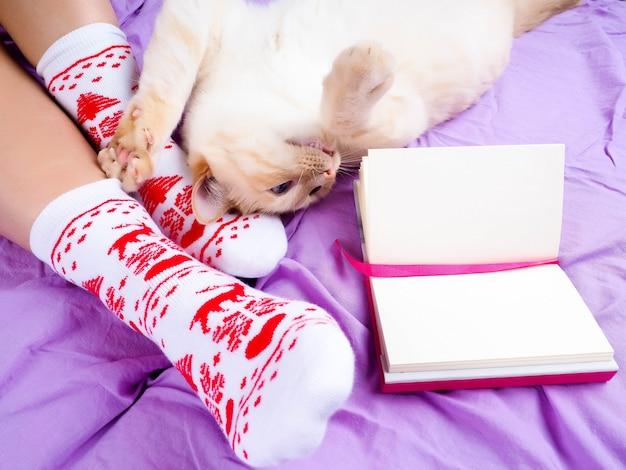 거실에 소파에 누워 고양이 크리스마스 양말, 크리스마스 양말 여성 다리 장식.
