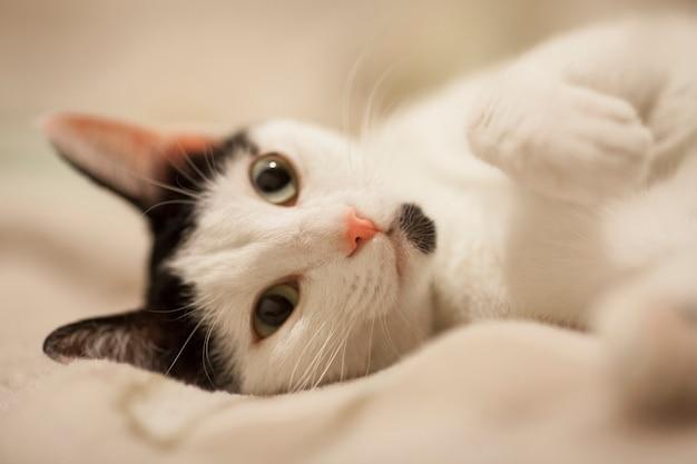침대에 누워 고양이