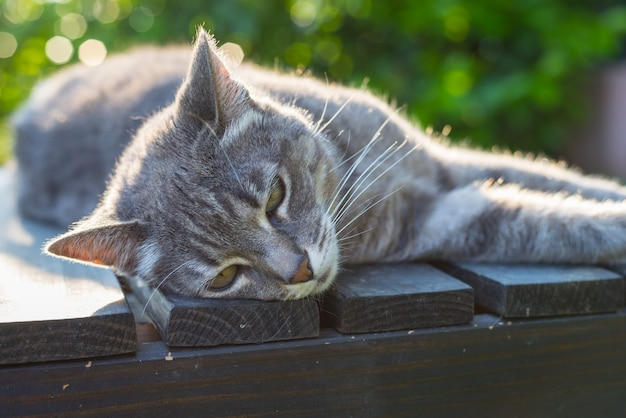 Cat lying on side on a bench in backlight