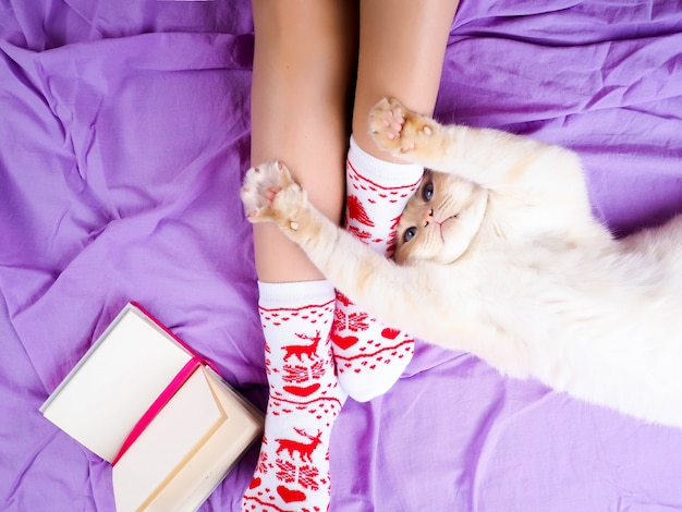 Cat lying on sofa in living room decorated for christmas, female legs in christmas socks.