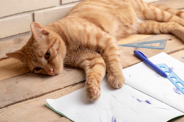 Cat lying on wooden table near homework inside