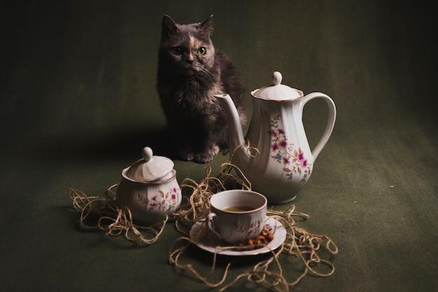 Cat near tea set