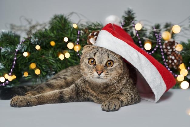 サンタの帽子の下のクリスマスツリーの横にある猫。