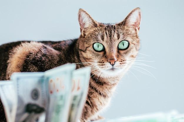 돈 다발의 배경에 있는 고양이. 동물 기부 개념입니다. 혼합 매체