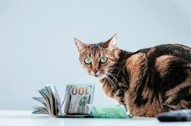 お金の束の猫。動物の寄付の概念