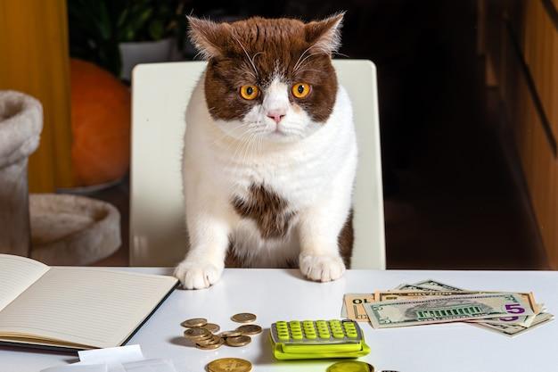 Кот на белом стуле за белым столом с деньгами