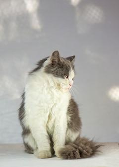 白い壁の上の猫。白と灰色の猫