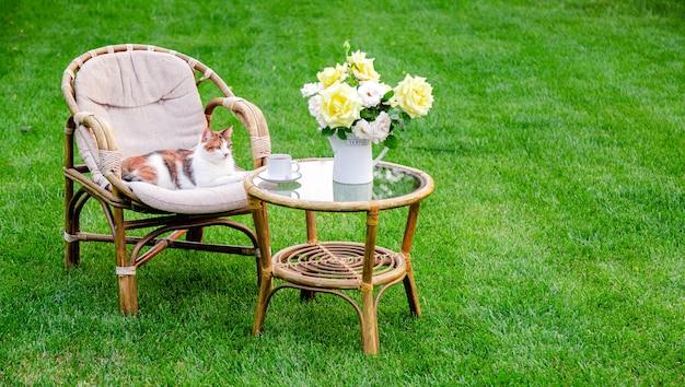 더운 여름날에 휴식을 취하기 위해 야외 잔디 잔디밭에 안락 의자 나무 정원 가구에 고양이. 자연 속에서 두 개의 자와 정원 풍경입니다. 공원 카페에서 쉬십시오. 뒤뜰 외관. 아무도.
